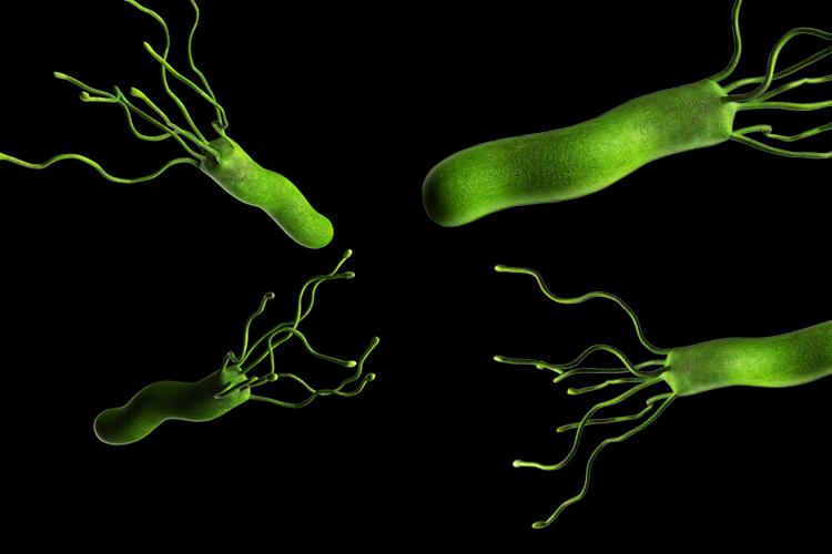 UvA-DARE (Digital Academic Repository) Helicobacter pylori ...
